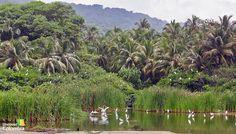 Local fauna - Tayrona Natural National Park, Colombia