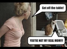 this gets me EVERY time! #cat #funny