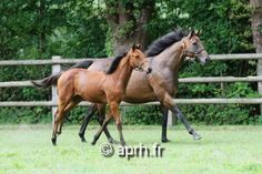 Champion Goldikova and her Galileo foal
