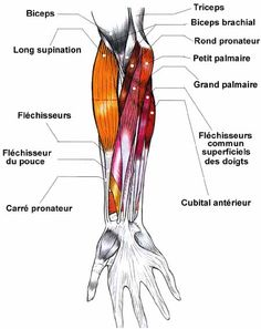 Lingua Francese Hand Anatomy, Body Anatomy, Noms Des Muscles, Nursing Notes, The Time Is Now, Medical School, Human Body, Massage, Tracy Anderson