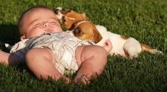 aww how adorable baby with puppies just chillen Baby Puppies, Cute Puppies, Adorable Dogs, Cute Pictures, Cool Photos, Funny Photos, Kid Photos, Baby Pictures, Baby Animals