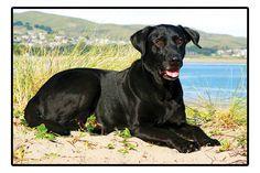 Black Labrador Retriever Doormat