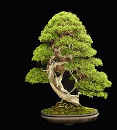 www.jonathan-singer-photography.com #bonsai #gardening.I really love the look of Bonsai trees.Please check out my website thanks. www.photopix.co.nz