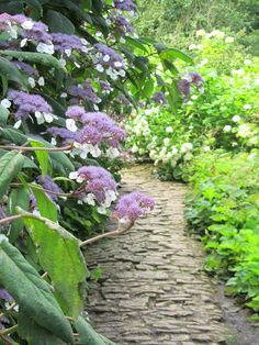 Meandering worn path