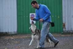 Komunikacja psów i zapobieganie zachowaniom agresywnym