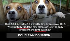 Support the FACT Act: End secrecy about wasteful federal animal testingdogs