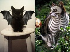 Terrifyingly Pawsome Halloween Cat Costume Ideas - http://ffunny.com/terrifyingly-pawsome-halloween-cat-costume-ideas/