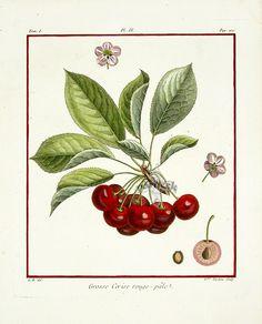 Huge fan of antique botanical prints!