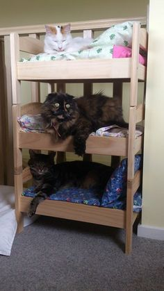 Oh um yes // Before & After: IKEA Doll Bed Does Double (& Triple!) Duty — REDDIT | Apartment Therapy Tap the link for an awesome selection cat and kitten products for your feline companion! Bow Chicka Meow Meow
