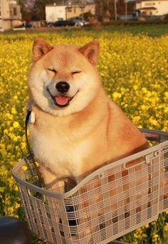 Much happy. Very basket. Wow.