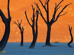 """The picture below is not that of a painting. It was taken inside the Namib-Naukluft Park in Namibia, in a strange and alien landscape called Dead Vlei. Although sounds similar to """"dead valley"""", Dead Vlei is not an actually valley. The term means dead marsh (from English dead, and Afrikaans vlei, a lake or marsh in a valley between the dunes)."""