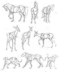 Письмо «Мы нашли новые Пины для вашей доски «Animals anatomy».» — Pinterest — Яндекс.Почта