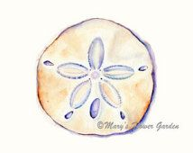 Sand Dollar Watercolor Print- 5 X 7 Beach Decor