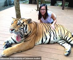 UD Student, Vi Bui,  visits Tiger Kingdom in Chaing Mai, Thailand #UDAbroad