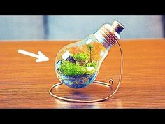 HOW TO MAKE AN ETERNAL TERRARIUM - YouTube