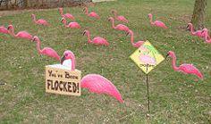 Run a Flamingo Fundraiser