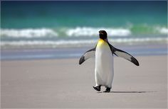 A Penguin in Paradise