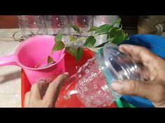 Creating a hydroponic kratky system without circulation from used bottles is one of the cheap and easy hydroponic systems without using water pumps where nut. Hydroponics System, Aquaponics, Fiji Water Bottle, Gardening Tips, Make It Yourself, Garden Ideas, Youtube, Lawn And Garden, Backyard Ideas
