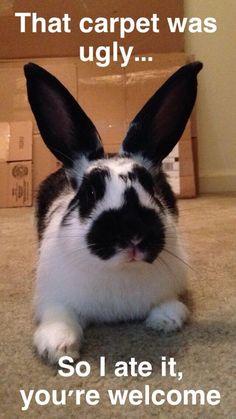 18 Funny Bunny Memes NEW! – Daily Pets Life 18 Funny Bunny Me. Animal Jokes, Funny Animal Memes, Cute Funny Animals, Cute Baby Animals, Funny Rabbit, Pet Rabbit, Cute Bunny Pictures, Funny Animal Pictures, Cute Baby Bunnies