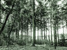 Nieuw in mijn Werk aan de Muur shop: Groen bos
