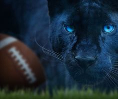 10 Signs You're A Panthers' Fan