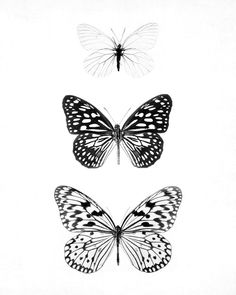 Black And White Butterfly Tattoo : black, white, butterfly, tattoo, White, Butterfly, Tattoo, Ideas, Tattoo,, Butterfly,