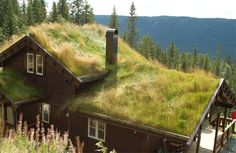 Alle info over groene daken op 1 plaatst. Voordelen - tips - doe-het-zelf - subsidie overzicht - voorbeelden
