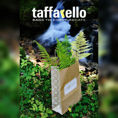 Our Nature Inside bags surrounded by Nature... #taffarello #madeinitaly #nature #green #followforlike #like4like #paperbags www.taffarello.com