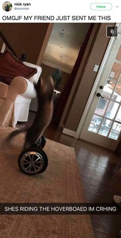 The hoverboard kitty: