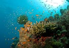 Experience the various colours of Andaman http://in.musafir.com/Holidays/Soothing_Waters_of_Andaman.aspx