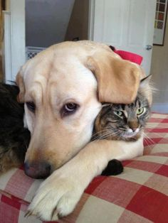 """Dog Loves His Cat... Or Is He Thinking, """"Please Hurry up and Take the Picture Already!!"""" 😁❤"""