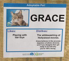Obvious Plant : Cat Likes-Dislikes