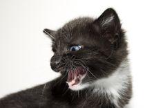 Black & White Kitten Compaining