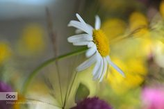 Summer and sun l by Heiwe. Please Like http://fb.me/go4photos and Follow @go4fotos Thank You. :-)