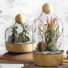 Generous terrariums are crafted from mouth-blown glass. It has a solid paulownia wood base and spherical wooden top adding to the character of each piece. Conta