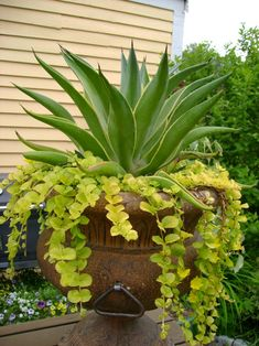 cacti and succulents | ... Ideas & Garden Ideas > Some Like It Hot! Growing Cacti and Succulents