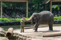 Hidden threath, Singapore Zoo
