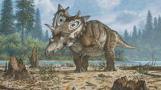 """Een vondst van een amateurarcheoloog is na tien jaar erkend als nieuwe dinosaurussoort. """"Spiclypeus shipporum"""" luidt de wetenschappelijke naam van de dinosaurus die zo'n 76 miljoen jaar geleden leefde."""