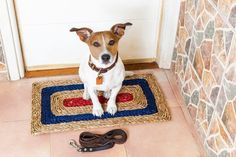 Ask A Dog Walker Where And How To Pick Dog Walking Insurance
