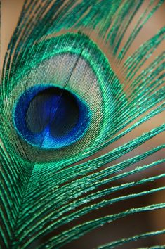 Peacock Color Scheme, Peacock Colors, Peacock Art, Peacock Feathers, Feather Photography, Art Photography, Peacock Images, Cute Wild Animals, Real Tattoo