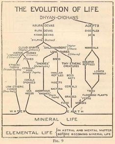 The Evolution of Life. The ladder of life which evolves through the forms in our midst is seen in Fig. 9. Theosophy
