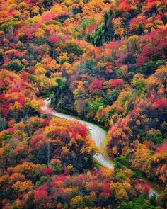 """""""A Road Runs Through It."""" Fall colors in the Great Smoky Mountains National Park."""