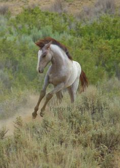Velvet - Sand Wash Basin Mustang