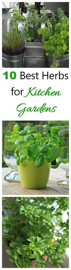 Cooking with fresh herbs makes all recipes better. See my list of the best herbs for kitchen gardens,