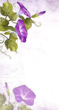 Purple morning glory Watercolor Wallpaper, Watercolor Flowers, Watercolor Paintings, Morning Glory Tattoo, Hawaiian Flower Tattoos, Morning Glory Flowers, Volubilis, Purple Flowers, White Flowers