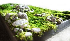 a beautiful moss picture with stones in different sizes Fairy Houses, Go Green, Garden Art, Fruit, Stones, Collage, Pictures, Gardening, Beautiful