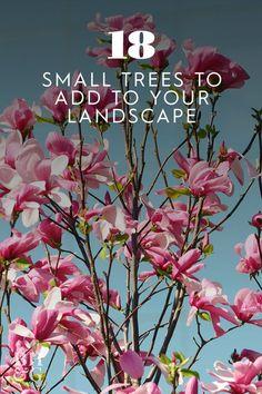 Garden Shrubs, Garden Plants, Yard Landscaping, Landscaping Ideas, Most Beautiful Flowers, Garden Landscape Design, Outdoor Living, Outdoor Decor, Shades Of White