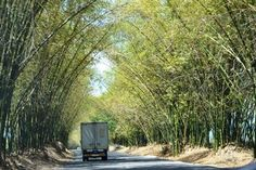 Bamboo Avenue, St. Elizabeth, Jamaica Road to YS Falls...whenever I pass here I know that I'm close to my grandparents house.