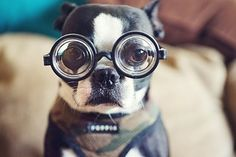 Funny dog with goggles