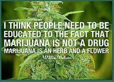 Marijuana is not a drug...